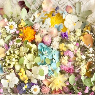 ドライフラワー花材セットNo.237⁑カラフルバラエティー(ドライフラワー)