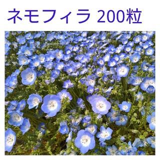 ネモフィラ種 200粒(その他)