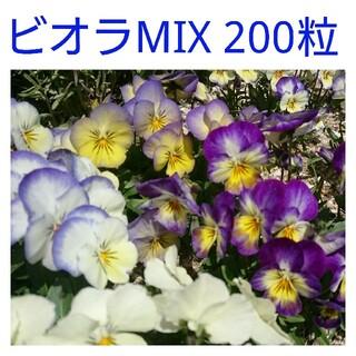 ビオラMIX種 200粒(その他)