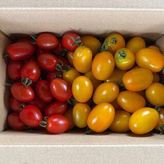 ミニトマト(レッドアイコ、イエローアイコ)1、9kg(野菜)