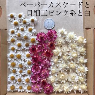 (22)ペーパーカスケードと貝細工(ピンク系・白)(ドライフラワー)