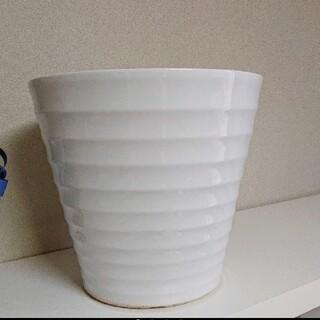 ホワイト陶器鉢 胡蝶蘭(その他)