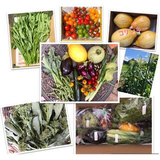 【無農薬】夏野菜詰め合わせ 80サイズ(野菜)