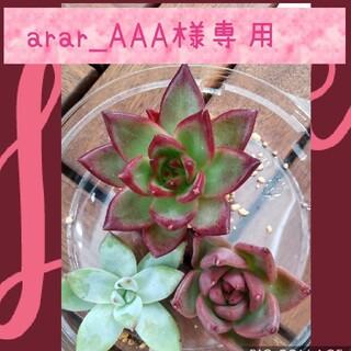 arar_AAA様専用(その他)
