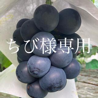 ちび様専用  ブラックビート2kg(フルーツ)