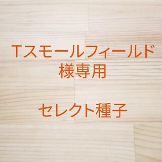 Tスモールフィールド様専用 セレクト種子 4袋(野菜)