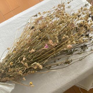 6月散歩で見つけた野の花 花束 ドライフラワー 宅配便(ドライフラワー)