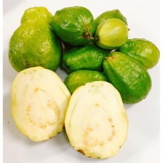 お買い得!甘くとろける!沖縄産グァバ白果実 無農薬かわいい小玉!1kg(フルーツ)