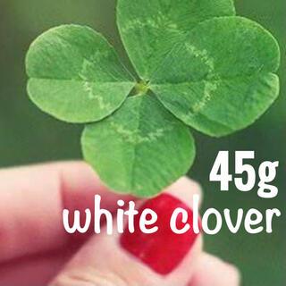 【最安値!説明書つき】ホワイトクローバー、シロツメクサの種 45g6万粒以上(その他)