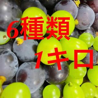 山梨県産朝採れぶどう粒食べ比べセット(フルーツ)
