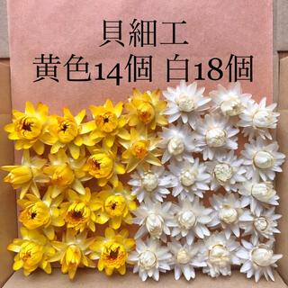 (28)貝細工 ヘリクリサム ドライフラワー 白と黄色(ドライフラワー)