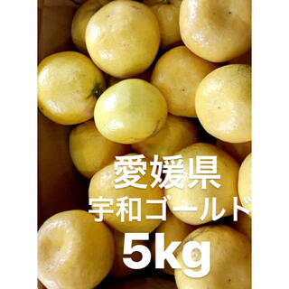 愛媛県 宇和ゴールド 河内晩柑 嵐ゴールド 5kg(フルーツ)