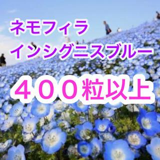 【説明書付き!】ネモフィラ インシグニスブルー 400粒以上!(その他)