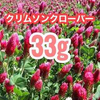 【説明書付き】33g9900粒クリムソンクローバー、クリムゾンクローバー(その他)