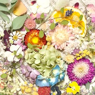ドライフラワー花材セットNo.239⁑カラフルバラエティー(ドライフラワー)