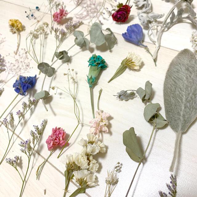 ドライフラワー  ポロポロ花材mix ハンドメイドのフラワー/ガーデン(ドライフラワー)の商品写真