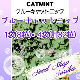 ブルーキャットニップ 家庭菜園 野菜 ハーブ 種(その他)