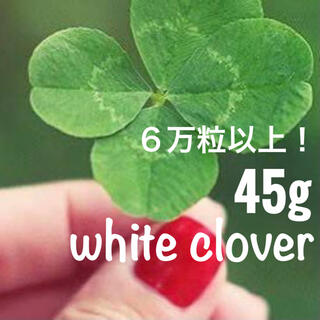 【最安値!説明書つき】ホワイトクローバー、シロツメクサの種 たっぷり45g(その他)