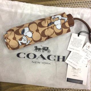 コーチ(COACH)のCOACH X PEANUTS  コラボ 傘 コーチ スヌーピー coach(傘)