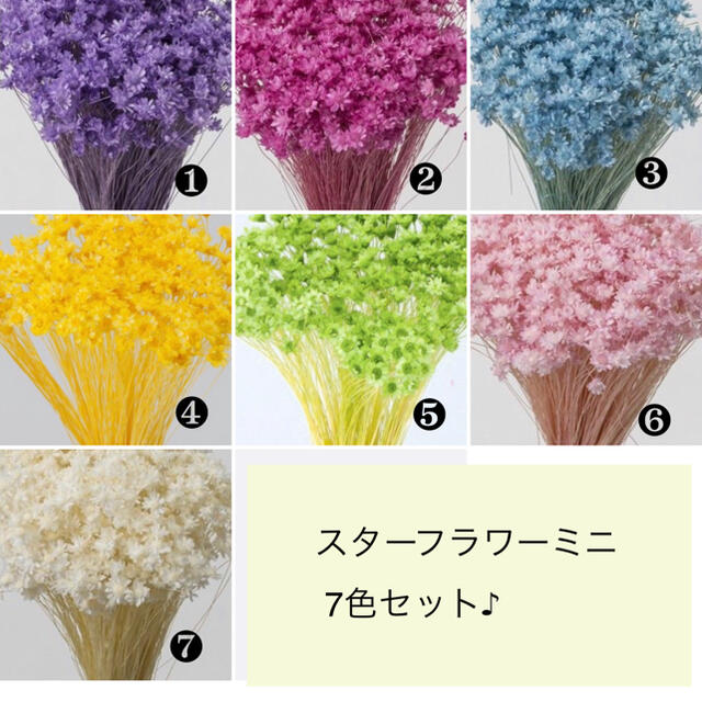 スターフラワーミニ7色セット(140本)☆ ハンドメイドのフラワー/ガーデン(ドライフラワー)の商品写真