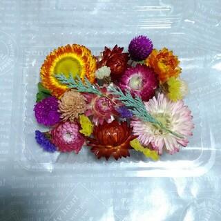 【A】 1パック300円 ドライフラワー 貝殻草 千日紅 スターチスなど  花材(各種パーツ)