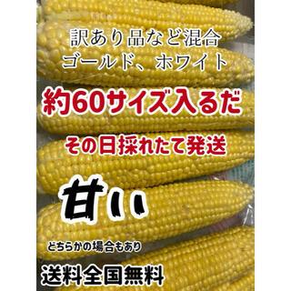 甘い訳ありゴールドホワイト約60サイズ入るだけ(野菜)