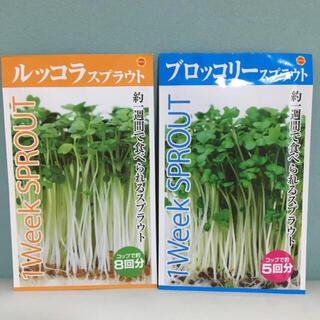ルッコラスプラウト&ブロッコリースプラウト セット(野菜)