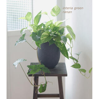 sold out✿*:greenの贈り物✿*(プランター)