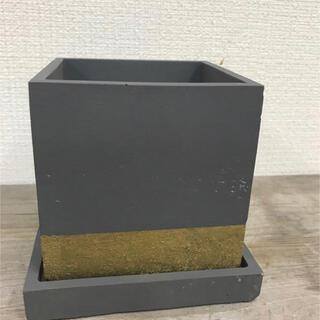 オシャレセメント鉢 グレーゴールドライン(プランター)