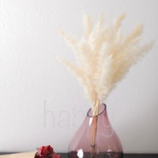 パンパスグラス ドライフラワー テールリード 白 20本セット【ミニ】(ドライフラワー)
