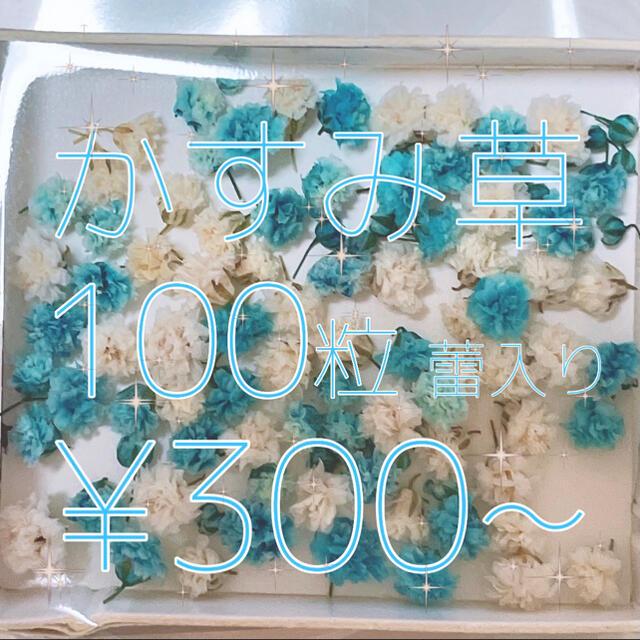 《残り1個》かすみ草 ドライフラワー 薄ブルー&ホワイトmix 蕾入り ハンドメイドのフラワー/ガーデン(ドライフラワー)の商品写真