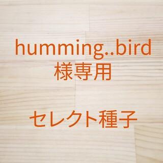 humming..bird様専用 セレクト種子 3袋(野菜)