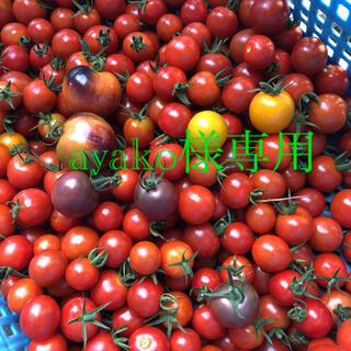 明日朝採り 無農薬 トマトセット ayako様専用(野菜)