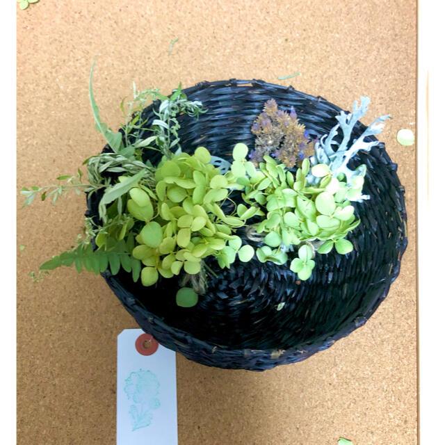 ナチュラルドライフラワー ミニミニスワッグ 2つセット 0816-2 アナベル ハンドメイドのフラワー/ガーデン(ドライフラワー)の商品写真