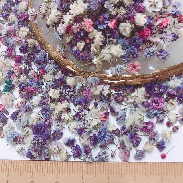 かすみ草 ドライフラワー 蕾開きかけヴィンテージパープル ハンドメイドのフラワー/ガーデン(ドライフラワー)の商品写真