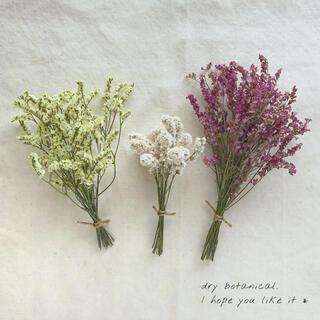dry botanical /  #1 ドライフラワー 花材  ハンドメイド(ドライフラワー)