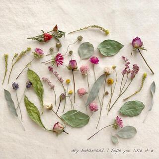 dry botanical /  #2 ドライフラワー 花材  ハンドメイド(ドライフラワー)