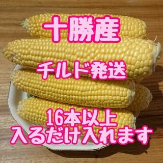 十勝の朝採れとうもろこし チルド発送(野菜)