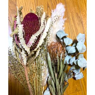 ドライフラワー 花材 プロテア パンパスグラス スワッグ (ドライフラワー)