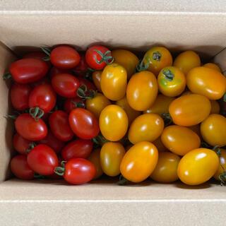 ミニトマト(レッドアイコ、イエローアイコ)1、8kg(野菜)