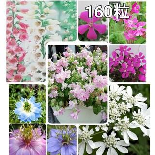 🌺花の種 シレネ2種 オルレア ニゲラ ジキタリス(プランター)