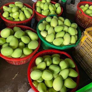 マンゴ(MANGO)のベトナム産グリーンマンゴー24kg(フルーツ)