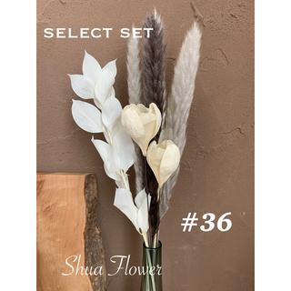 #36 セレクトセット ドライフラワー テールリード select パンパス(ドライフラワー)