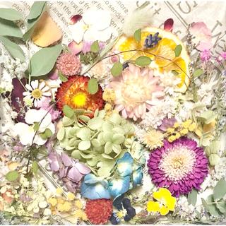 ドライフラワー花材セットNo.241⁑カラフルバラエティー(ドライフラワー)