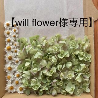 【will flower様専用】ペーパーカスケードとオレガノケントビューティー(ドライフラワー)