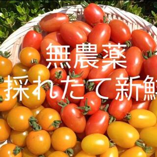 無農薬栽培ミニトマト(野菜)
