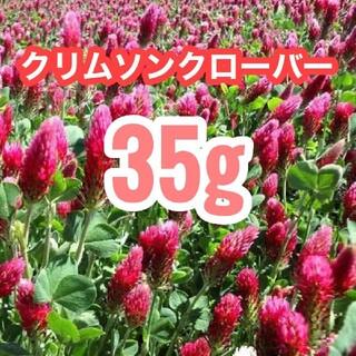 【説明書付き】35g10500粒クリムソンクローバー、クリムゾンクローバー(その他)