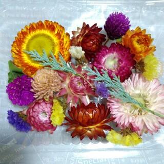 【A】 4パック999円 ドライフラワー 貝殻草 千日紅 スターチスなど  花材(各種パーツ)