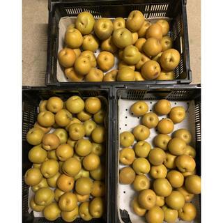 豊水梨訳あり 80サイズ梱包後5キロ以内(フルーツ)