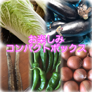 詰め合わせ コンパクトボックス(野菜)